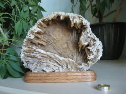 Fossilized Coral w/Stand